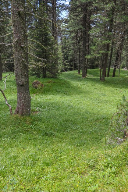 Grassy forest.