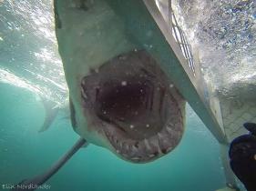 Bigger mouth!