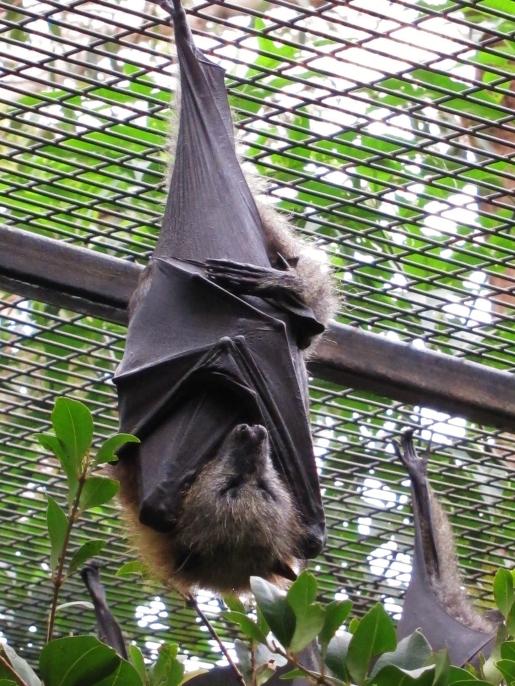 Flying fox! Cute!