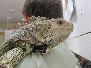 A really big lizard.
