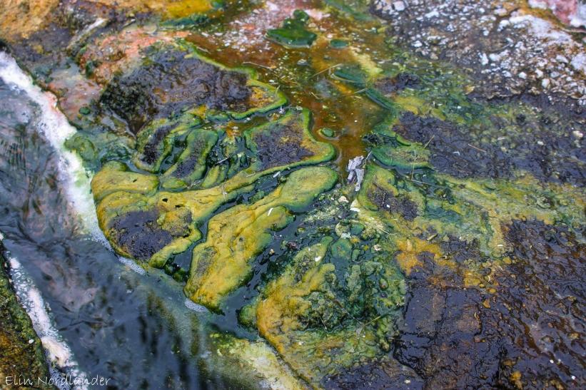 Lime algae.
